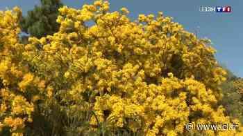 À la découverte de Bormes-les-Mimosas hors saison dans le Var - LCI
