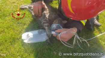Montebello Vicentino, gatto salvato da un incendio: VIDEO dei Vigili del Fuoco che rianimano il gatto con... - Blitz quotidiano
