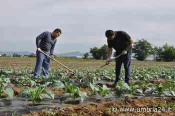 'Coltivare talenti', a Torgiano 30 giovani coinvolti in un progetto di agricoltura sociale - Umbria 24 News