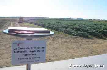 Plateau de Saclay, Triangle de Gonesse : une piste pour protéger les terres agricoles de l'urbanisation - Le Parisien