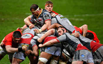 Shingler returns but Scarlets outmuscled - Welsh Rugby Union