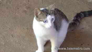 Moradores de una comunidad en Dolega preocupados por aparición de gatos muertos - Telemetro