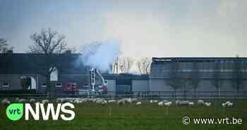 Uitslaande brand in paardenfokkerij in Retie - VRT NWS