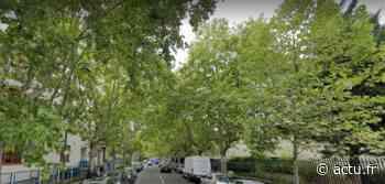 Val-de-Marne. Maisons-Alfort veut planter 1000 nouveaux arbres - actu.fr