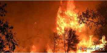 """Sicilia, forestale appicca incendio in riserva """"Serre di Ciminna"""": 61enne arrestato - Digitale terrestre free: canale 652 - WLTV"""