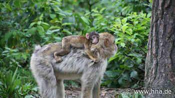 Geplanter Affenwald will Frielendorf mit aktivem Artenschutz als touristischen Standort aufwerten - hna.de