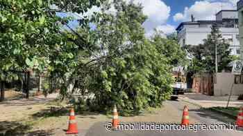 Queda de árvore bloqueia Rua Marquês do Alegrete - Mobilidade Porto Alegre