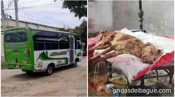 Despiden a conductor de Cootransnorte que atropelló a un perrito en Venadillo y no lo auxilió - Ondas de Ibagué