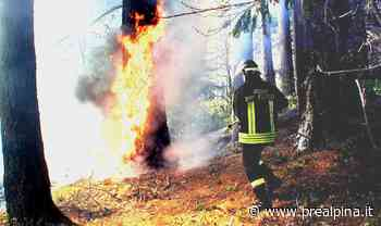 Sesto Calende: bosco in fiamme - La Prealpina
