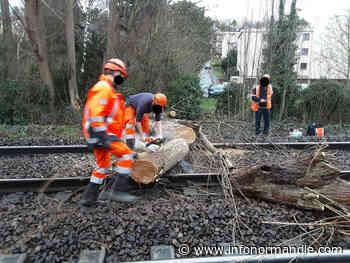 Yvelines : un arbre s'abat sur les voies à Villennes-sur-Seine, le trafic des trains interrompu - InfoNormandie.com