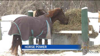 Horse lovers find success with mental health initiative in Grand Falls-Windsor - ntv.ca - NTV News