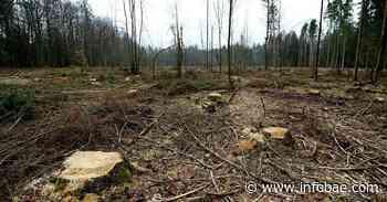 El Gobierno polaco autoriza volver a talar en un bosque patrimonio de la UNESCO - infobae