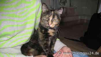 Bad Feilnbach: Wer vermisst seine Katze - chiemgau24.de