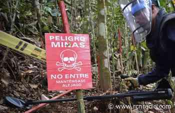 Por temor a minas antipersona, 46 indígenas permanecen en Frontino, Antioquia - RCN Radio