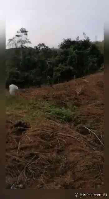 Campesinos de Anorí protestan por erradicación forzada del Ejército - Caracol Radio