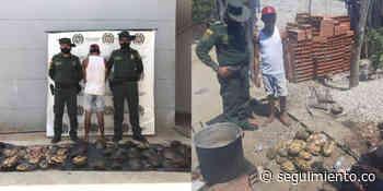 Capturan a hombre por sacrificar 31 hicoteas en un restaurante de Pivijay - Seguimiento.co