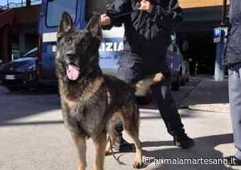 """Cani antidroga """"in affitto"""" per contrastare lo spaccio a Vignate - Prima la Martesana"""
