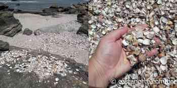 Banhista encontra imenso depósito natural de conchas em praia paradisíaca de Itanhaém (SP)   Vídeo - Jornal Costa Norte