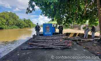 Incautan 100 trozas de mangle rojo en Juradó – Chocó   - Confidencial Colombia
