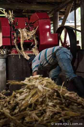 En Supía le apuestan a la producción de licores agrícolas con paneleros del municipio - Eje21