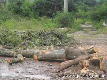 Lluvias causaron varios accidentes de tránsito en Libertador General San Martin - Jujuy al día