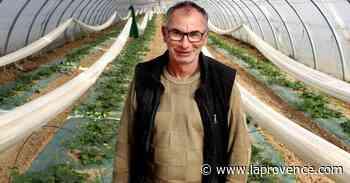 """Pernes-les-Fontaines : pour Pierre Jean, """"le melon, c'est l'école de l'humilité"""" - La Provence"""