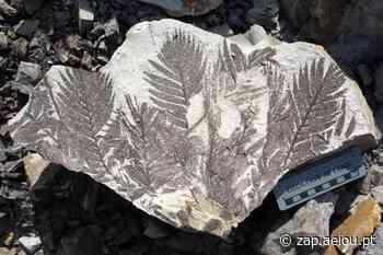 """""""Pompeia de plantas pré-históricas"""" revela segredo evolucionário - ZAP"""