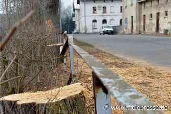 Zoff um Baumfällungen in Mulda: Landratsamt rudert zurück - Freie Presse