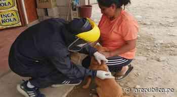 Arequipa: buscan vacunar contra la rabia a 7.500 perros en Yura - LaRepública.pe