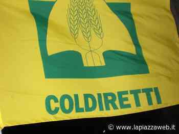 Conselve, nuova sede per Coldiretti - La PiazzaWeb - La Piazza