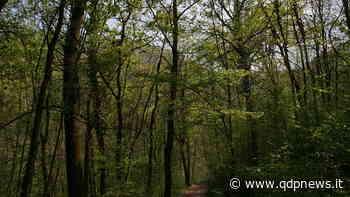 A Crocetta del Montello e a Cornuda associazioni unite per la difesa dell'integrità del bosco di Fagarè - Qdpnews