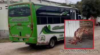 Alcalde de Venadillo pide reintegrar a conductor despedido por atropellar a un perro y no auxiliarlo - Ondas de Ibagué