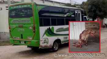 Alcalde de venadillo pide que se reintegre al conductor que mató a un perro y no lo auxilió - Ondas de Ibagué