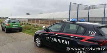 Acerra e Casalnuovo di Napoli, Carabinieri impegnati nel contrasto all'inquinamento ambientale - Reportweb