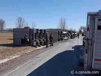 Firefighters, farmers round up cattle after transport rollover in Mississippi Mills - Canada.com