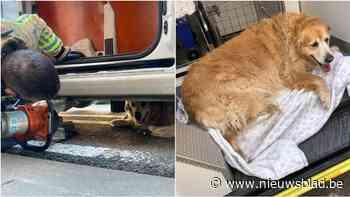 Verblinde bestuurder kan voetganger op het nippertje ontwijken maar rijdt dan haar hond aan