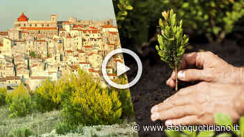 Vico del Gargano, ex insegnante pianta un albero per ogni concittadino morto di Covid - StatoQuotidiano.it