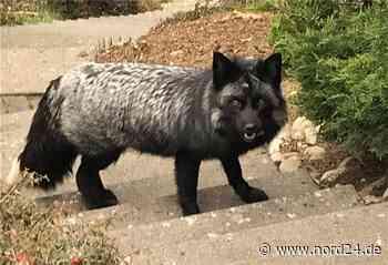 Tierpark Cux-Art in Beverstedt freut sich über Besucher - Nord24