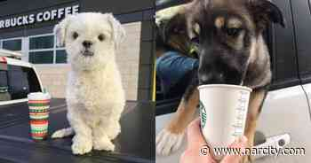 This Ontario Starbucks Really Wants To Say Hi To Your Dog & Give It A Free 'Puppucino' - Narcity Canada