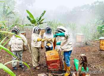 Cerrejón dona un apiario al municipio de Hatonuevo - EL HERALDO
