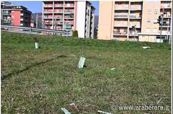 TORRE BOLDONE - Il 'Bosco Urbano' e quella plastica lasciata… dai giardinieri - Araberara
