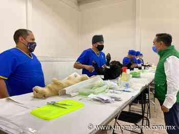 En Amecameca Campañas gratuitas suman 700 esterilizaciones a animales de compañía. - UnomásUno