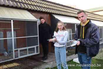 Dieven stelen 24 kostbare duiven die samen 75.000 euro waard zijn