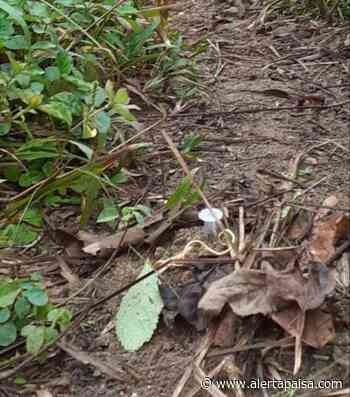 Iglesia Católica denuncia que grupos armados siguen sembrando minas en Murindó, Antioquia - Alerta Paisa