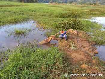 Atolado Cavalo é resgatado após cair em lago de Barra Bonita - JCNET - Jornal da Cidade de Bauru