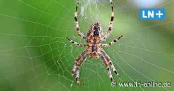 Lensahn: Spinne verursacht Unfall auf der A1 - Lübecker Nachrichten