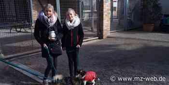 Kim Summer Löser und Anna Klassen sammelten Spenden für Tierheim Quedlinburg: 279 Euro kamen zusammen - Mitteldeutsche Zeitung