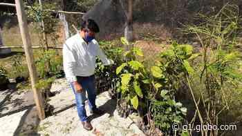 Estação de Tratamento de Esgoto de Iguaba Grande ganha viveiro de mudas - G1