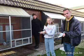 Dieven stelen 24 kostbare duiven die samen 75.000 euro waard zijn - Gazet van Antwerpen