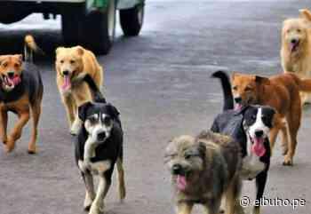 Arequipa: Cerro Colorado y Yura tienen la mayor incidencia de casos de rabia canina - El Búho.pe